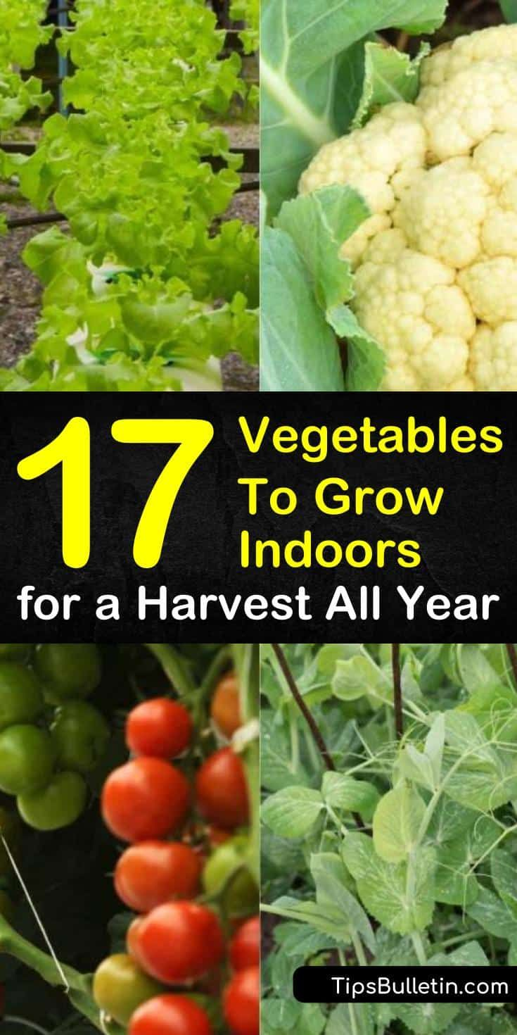 Photo of 17 Easiest Vegetables To Grow Indoors for a Harvest All Year -…