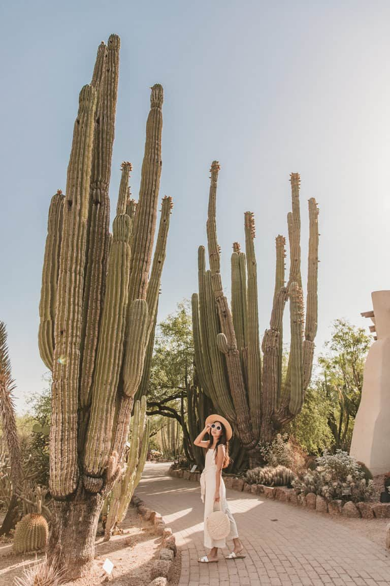7 Top Things To Do In Tempe Arizona
