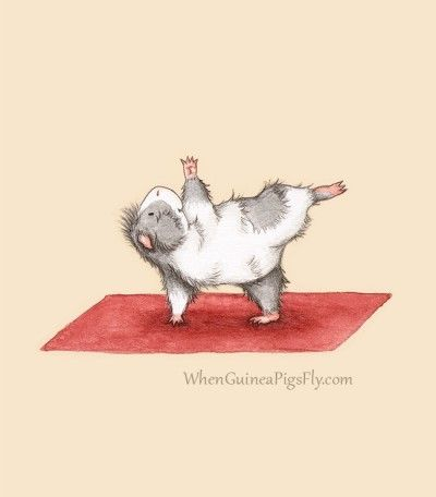 Yoguineas by When Guinea Pigs Fly - Half Moon Pose