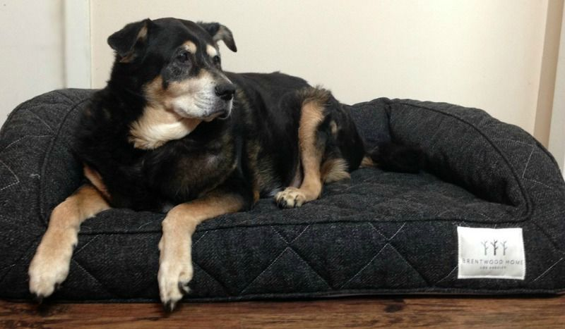 Brentwood Home Runyon Orthopedic Pet Bed Arv 200 Giveaway Blog