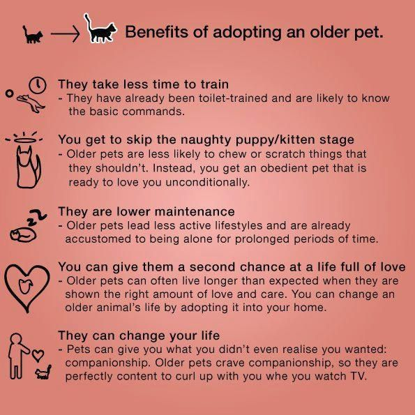 Benefits Of Adopting An Older Pet I Would Also Add The Often