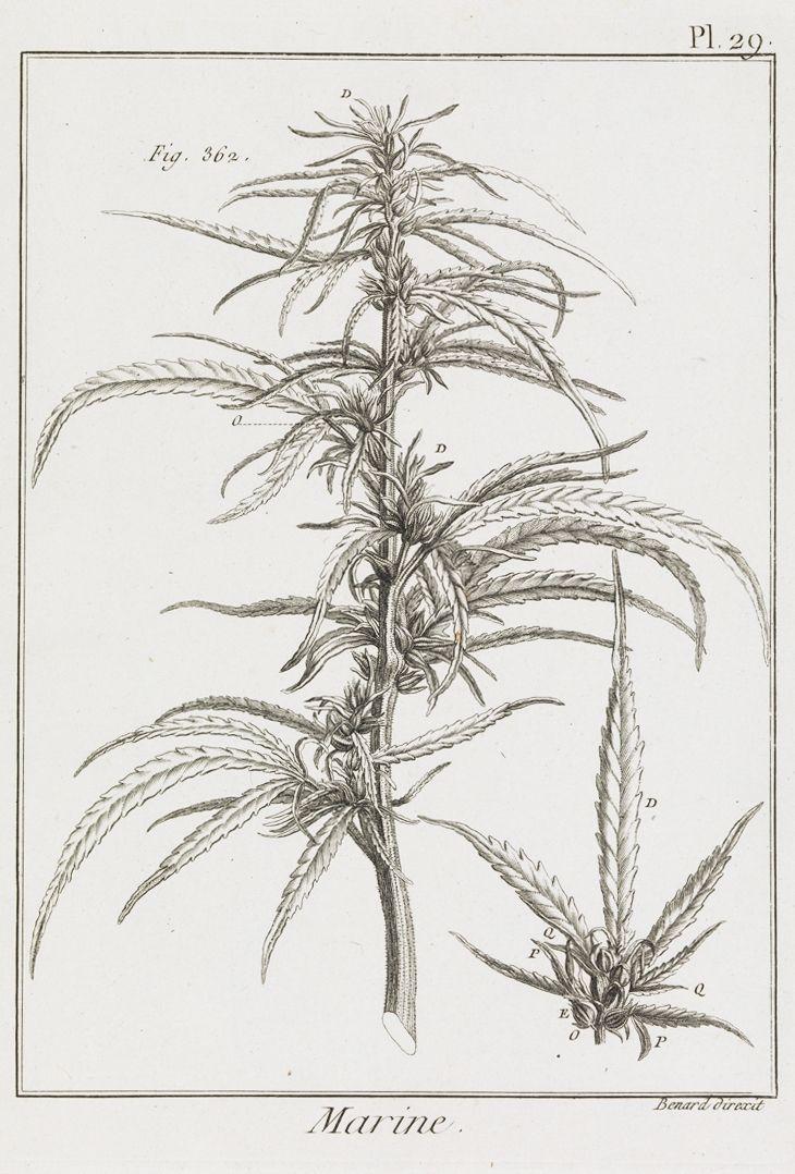 botanical illustration library