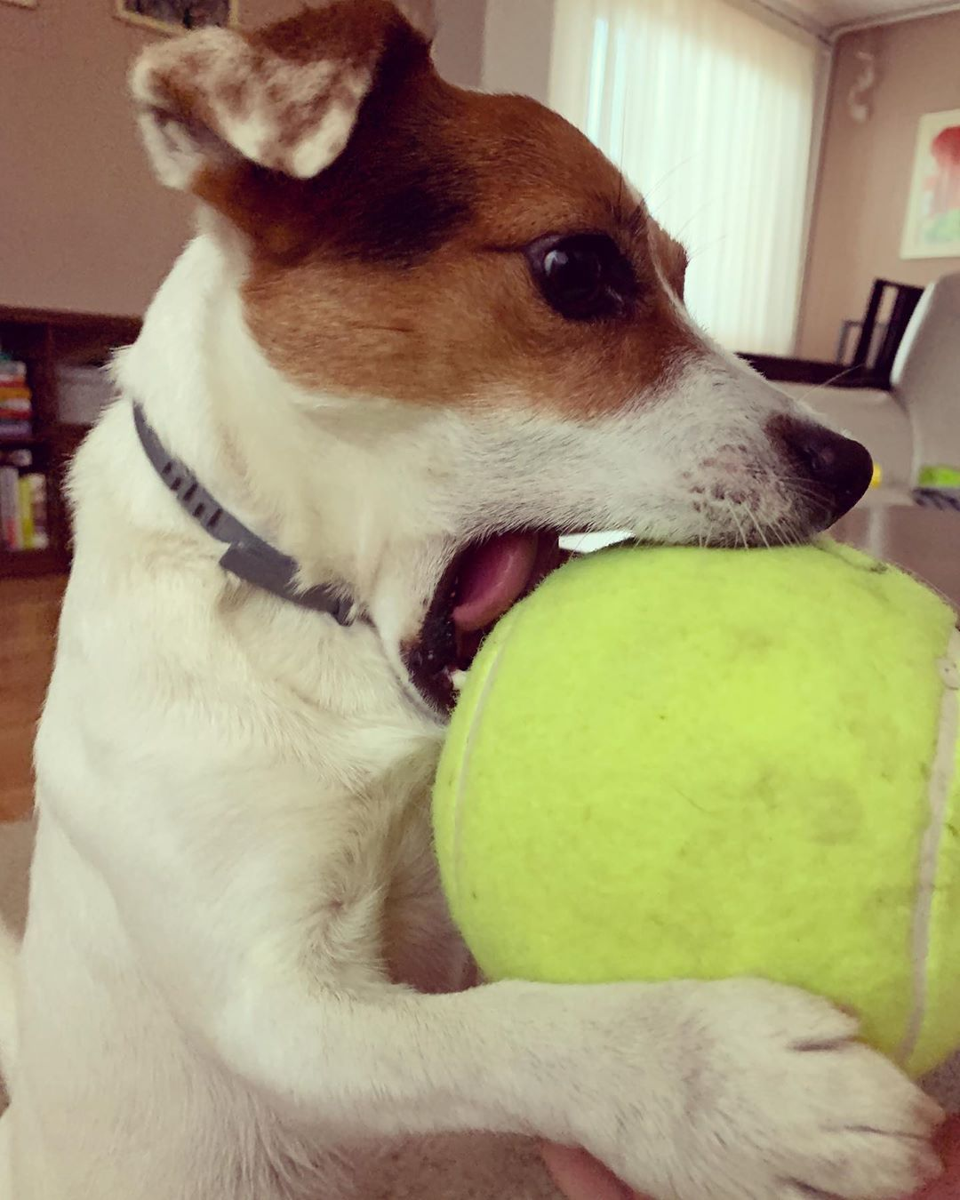 Important Mission Must Fit In Mouth Tennis