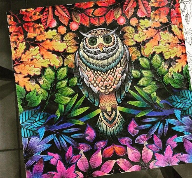 Owl Secret Garden Coruja Jardim Secreto Johanna Basford Adult ColoringColoring BooksColor