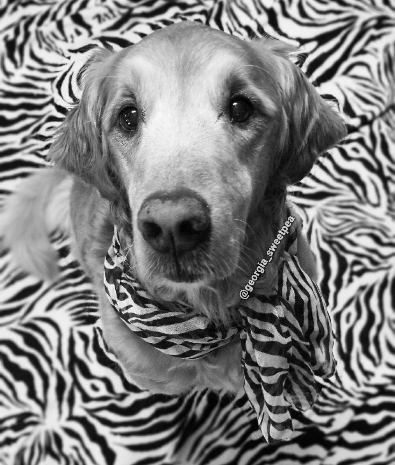 Fashionable dog Follow me on Instagram