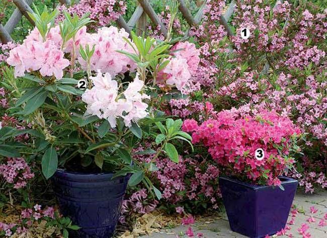 composition de fleurs pour la terrasse pour avoir un beau jardin am nagement trucs et. Black Bedroom Furniture Sets. Home Design Ideas