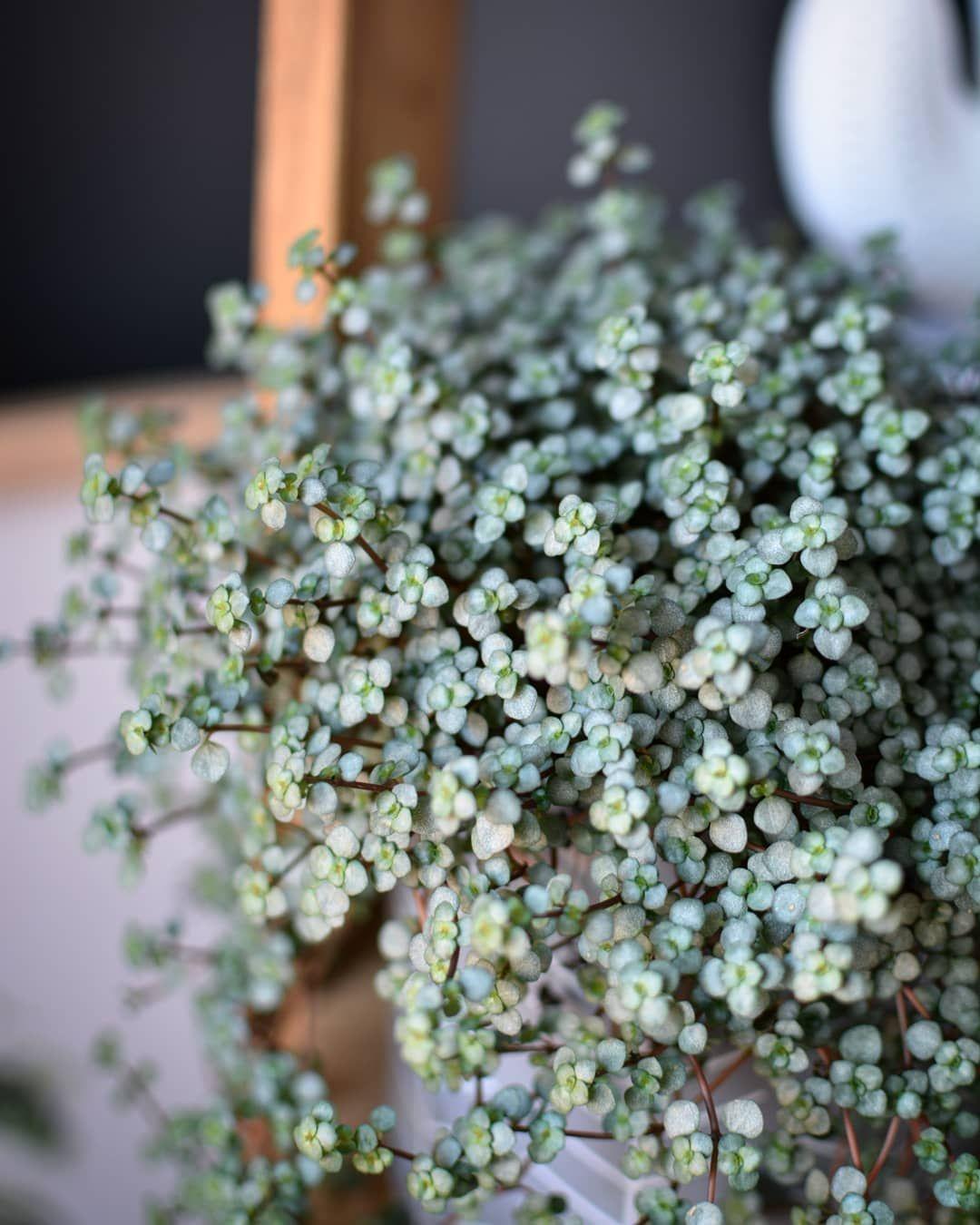 Grünpflanzen Green Plants Zimmerpflanzen: Zimmerpflanzen, Garten Pflanzen