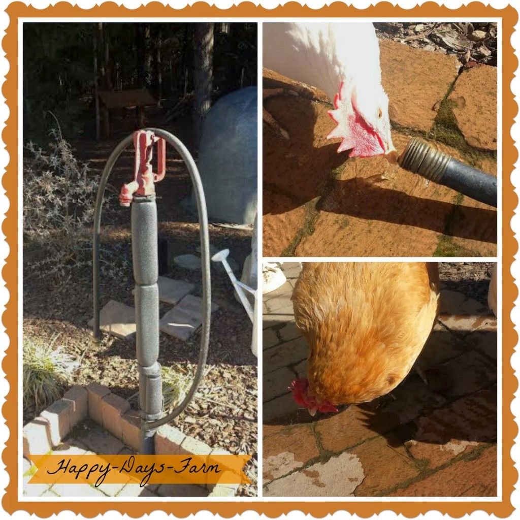 A Heated Chicken Waterer Keeps Water From Freezing