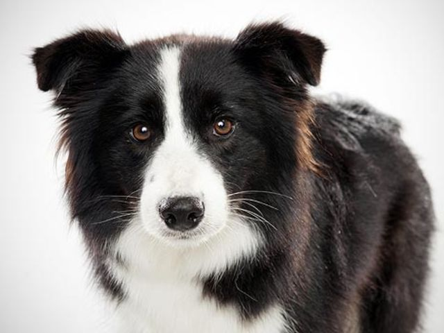 What Type Of Dog Are You Smartest Dog Breeds Herding Dogs Dog