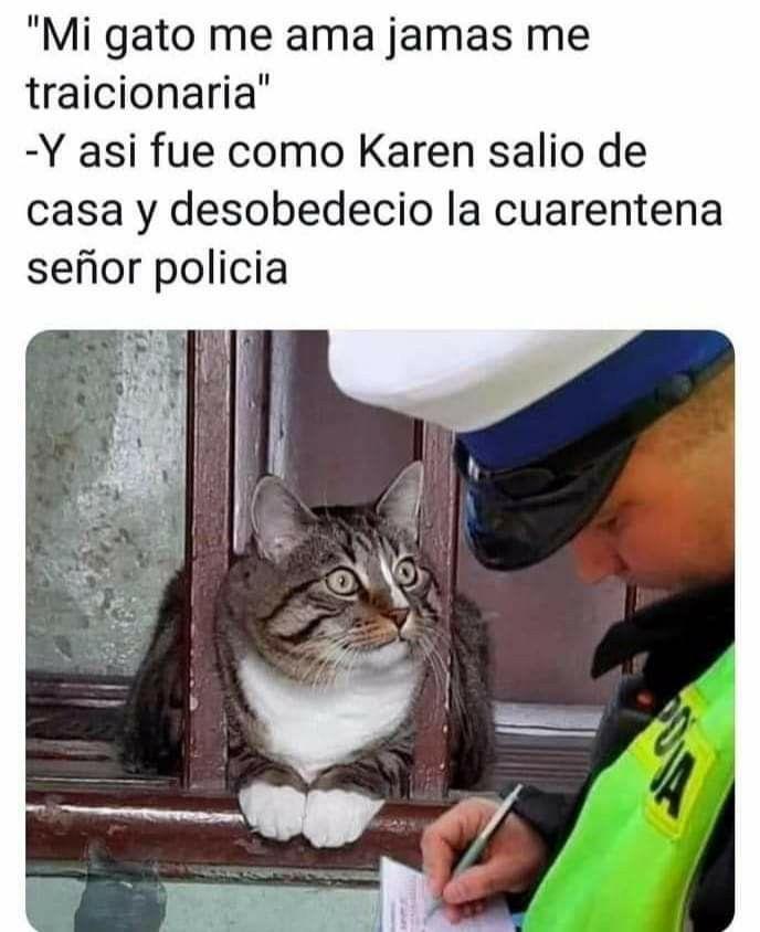 Pin En Karen Y Su Gato