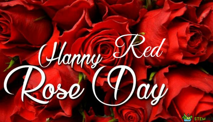 Its National Red Rose Day! It is an annual celebration of