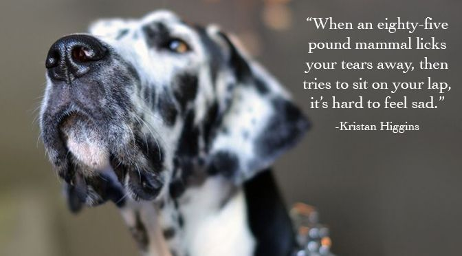 52 Quotes About Dogs That All Dog Lovers Need To Know Dog Quotes