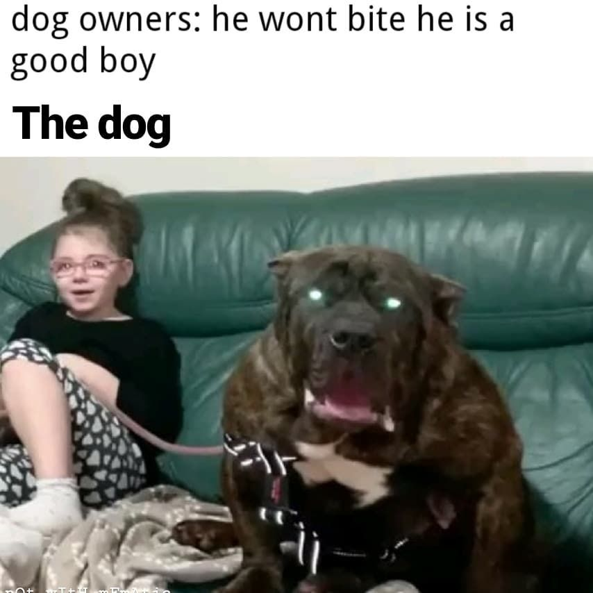 It S True Though People Are Terrified Of My Dog And She S Just There Only Seeming All Threateni In 2020 Clean Funny Pictures Funny Relatable Memes Really Funny Memes