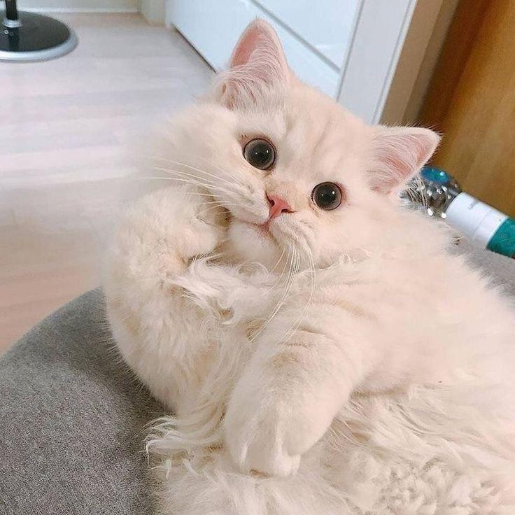 Cats Pets Cute ล กส ตว น าร ก แมว ส ตว สต ฟฟ