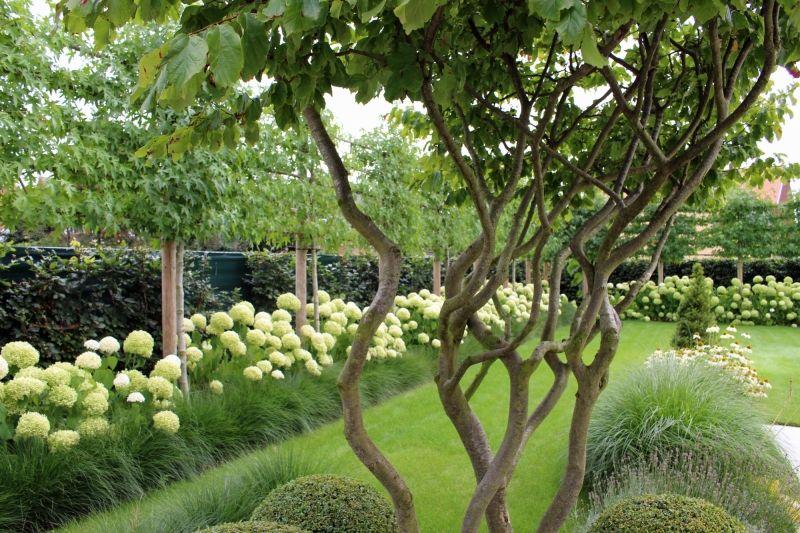 Mooie Meerstammige Boom Inspiratie Groen Planting Inspiration