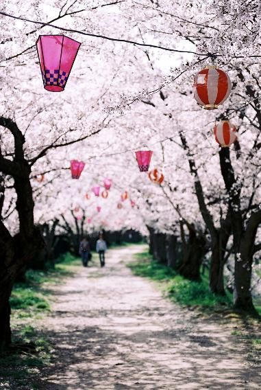 Spring S Almost Here The Most Amazing Cherry Blossom Viewing Around The World Toyonaka Cherry Blossom Festival Cherry Blossom