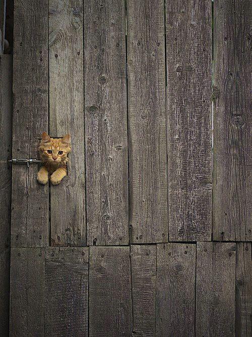Hai. I'm a kitty.
