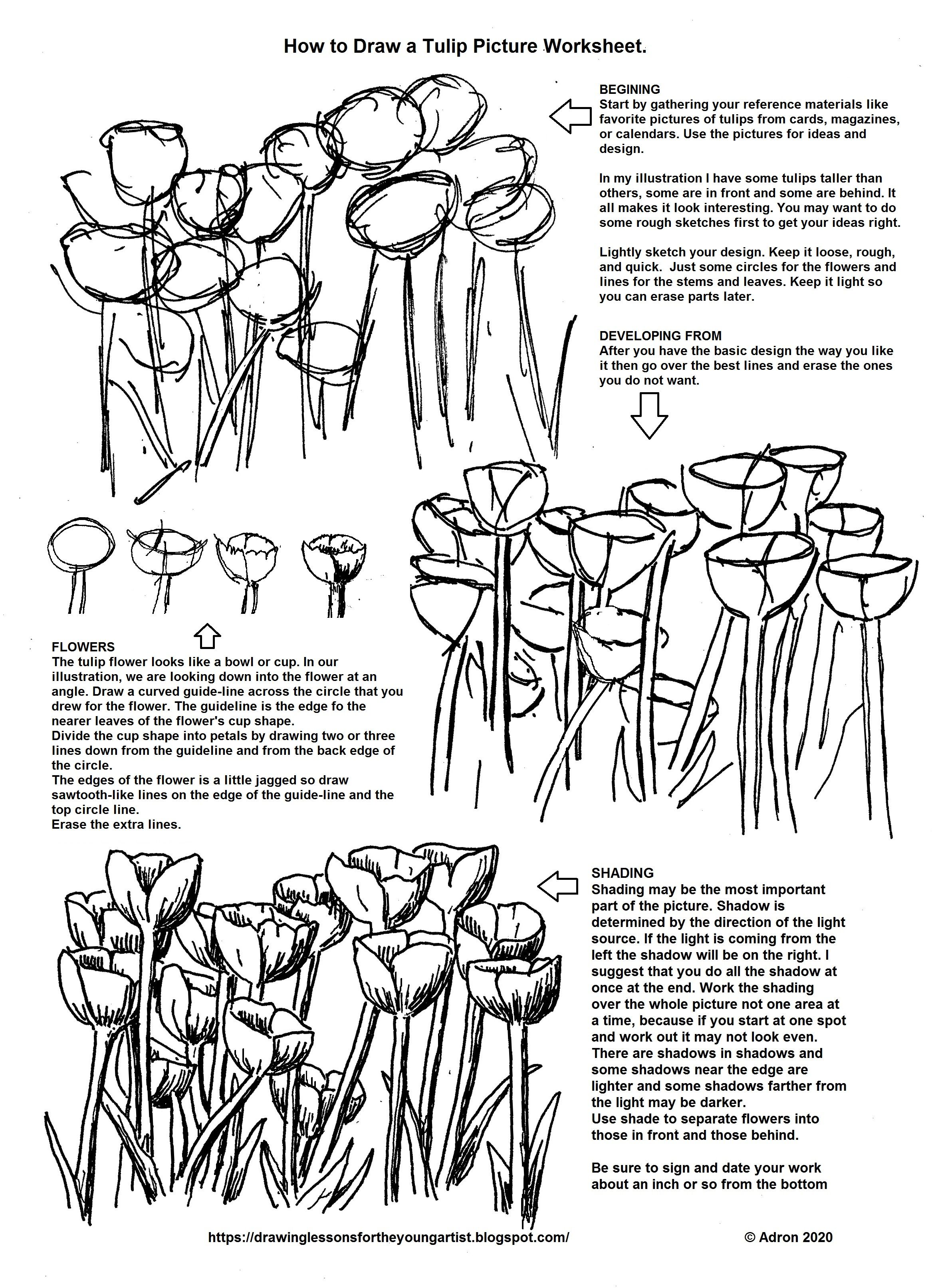 Tulips How To Draw Worksheet In