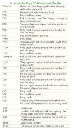 Puppy House Training Do S And Don Ts Labrador Retriever Dog
