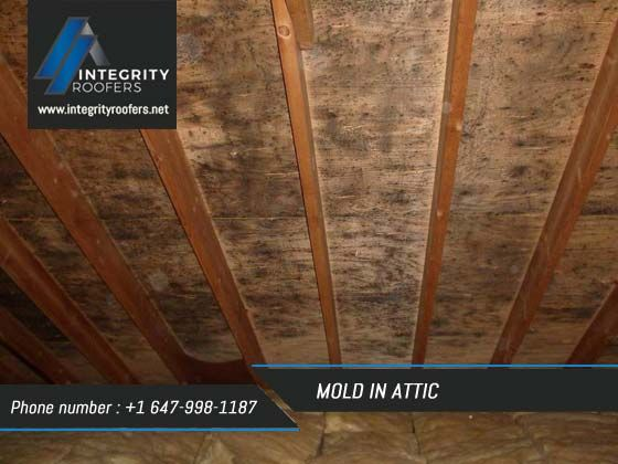 Mold In Attic Is A Common Problem That Many People Come Across Moisture Problem Is The Main Cause Behind This Problem Before Decidin In 2019 Diy Molding Attic Design Attic Remodel