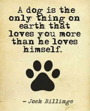 23 Amazing Quotes for Dog and Animal Lovers