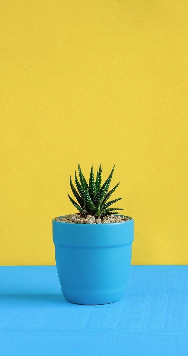 Blue Yellow Yellow Wallpaper Flower Background Wallpaper Plant Wallpaper