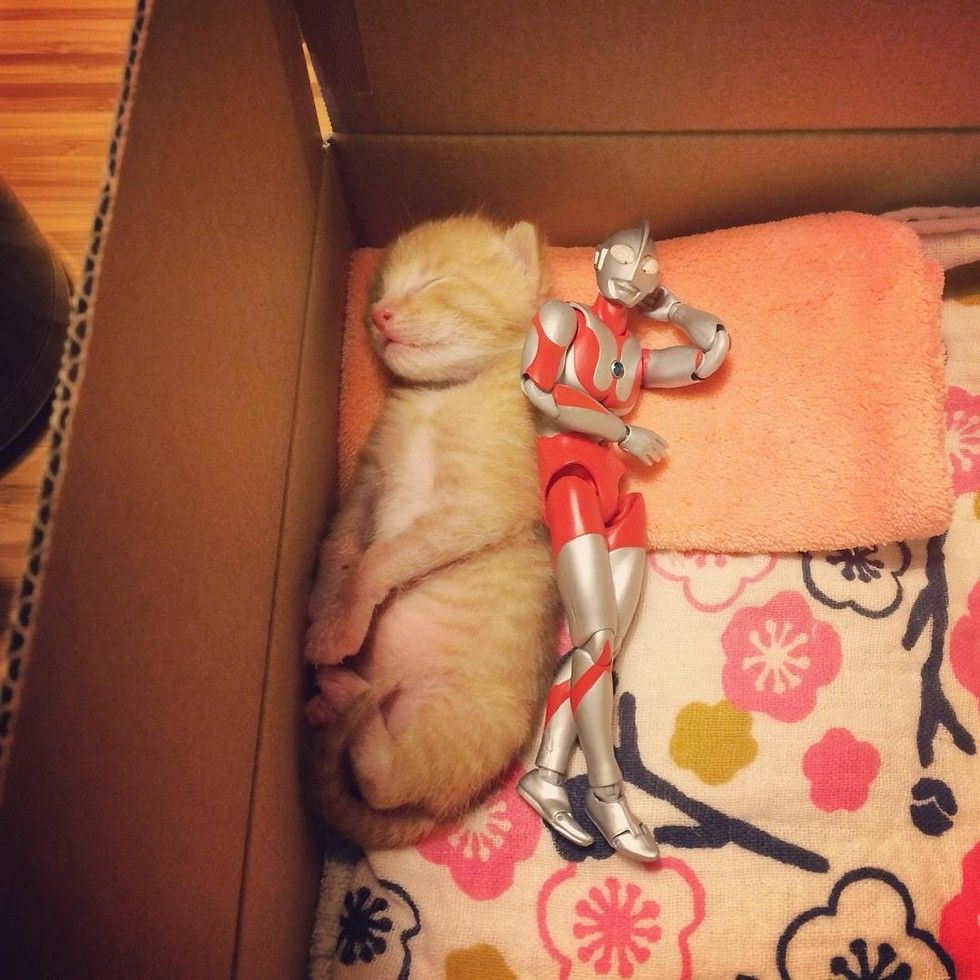 Meet Two Best Friends A Kitten And His Ultraman Toy Page 4 Mutually Cats And Kittens Kitten Rescue Kitten