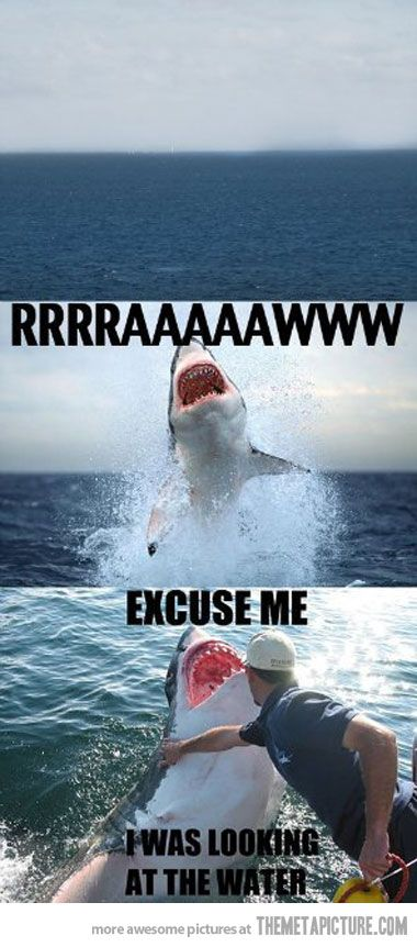 Shark Attack Sharks Funny Funny Pictures Funny Animals