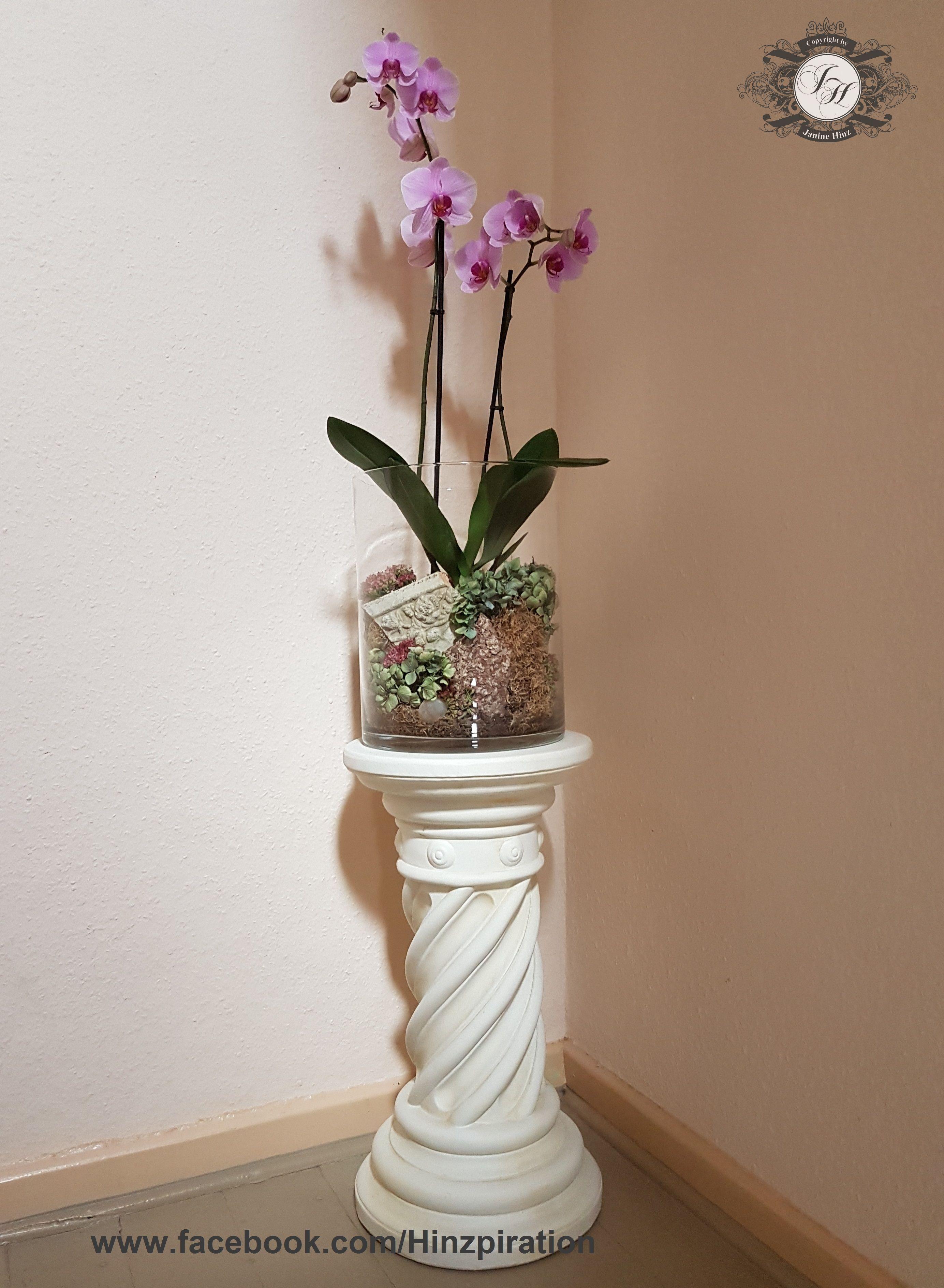 orchidee mit fette henne moos und hortensien dekoriert herbst pinterest. Black Bedroom Furniture Sets. Home Design Ideas