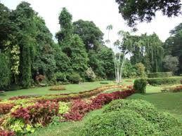 Image result for jardins botanique
