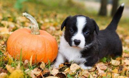 Puppies for Sale Under 300 Price Under 300