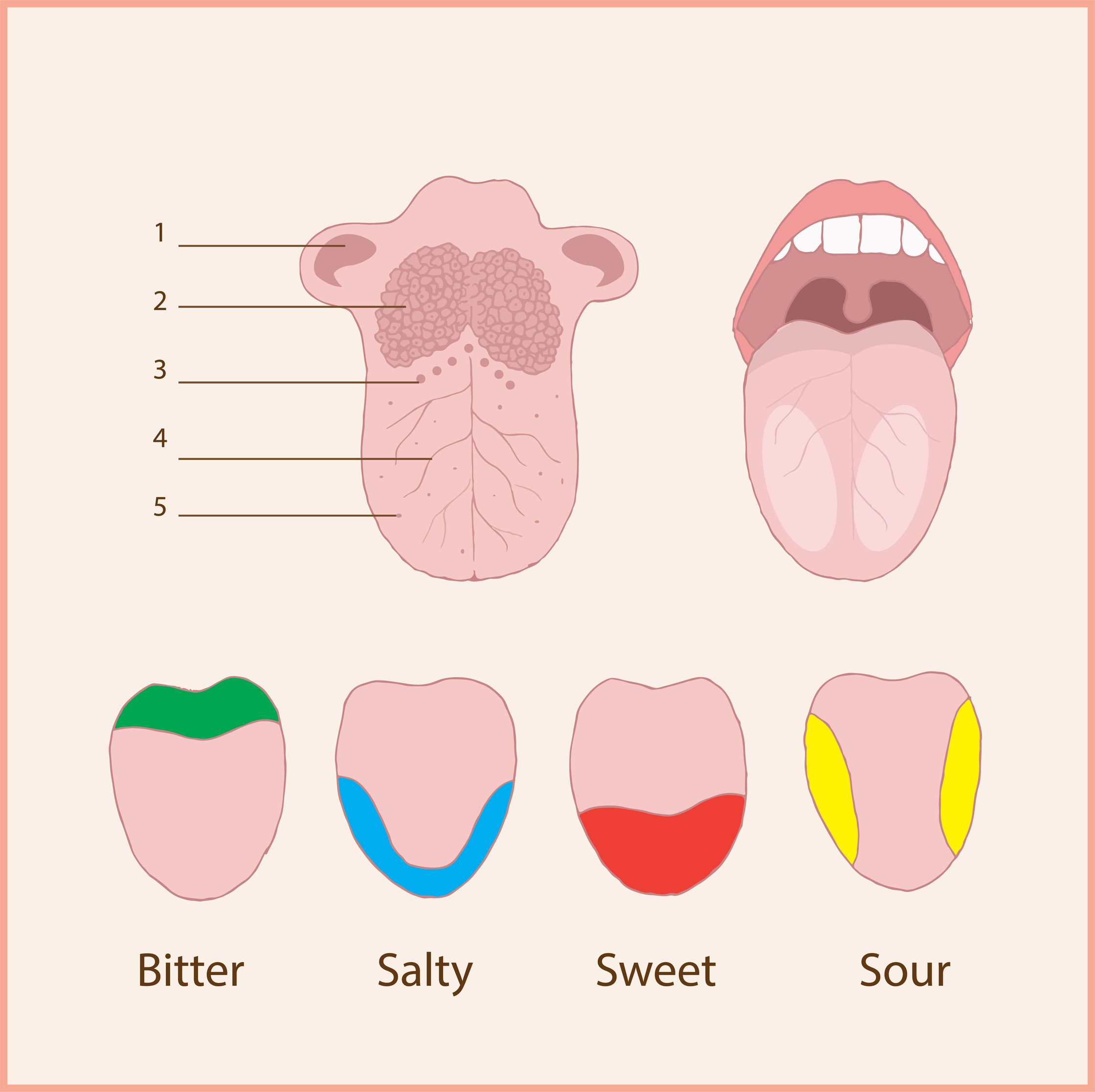 Heard That Different Parts Of Your Tongue Have Different