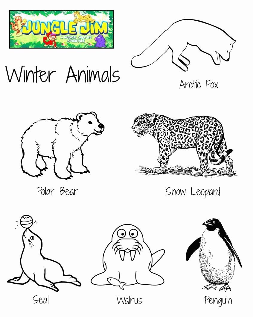 Free Woodland Animal Coloring Pages