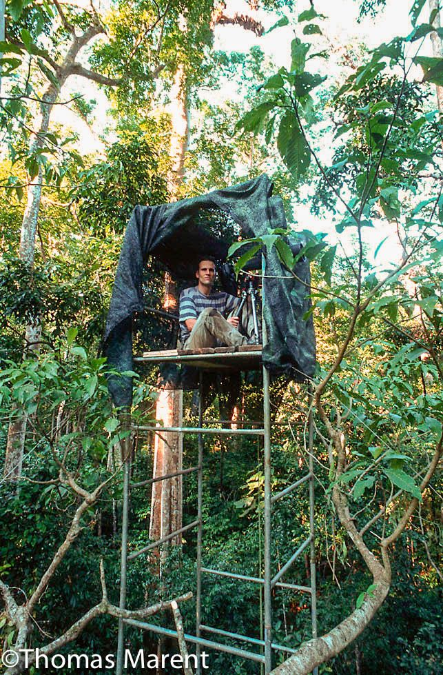 Thomas Marent is a rainforest and wildlife photographer