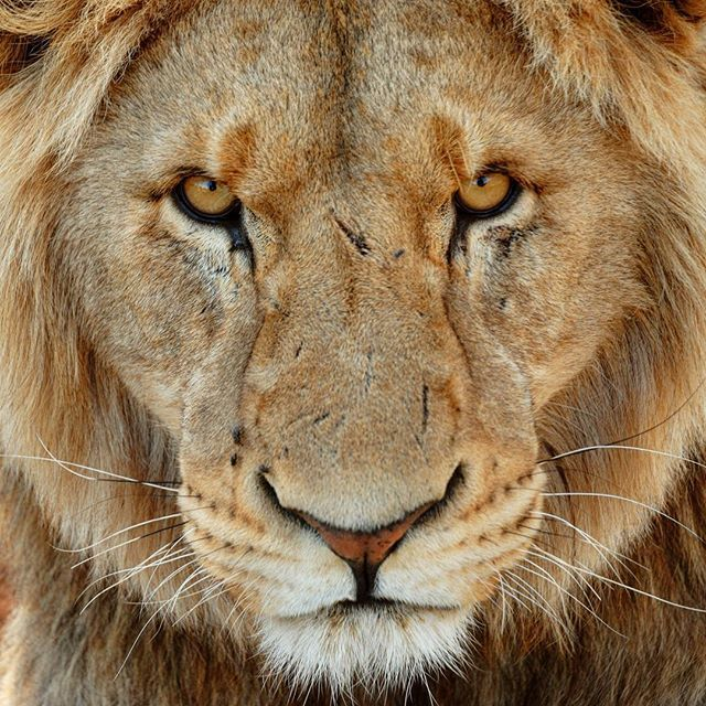 Pin On Incredible And Beautiful Animals And Wildlife