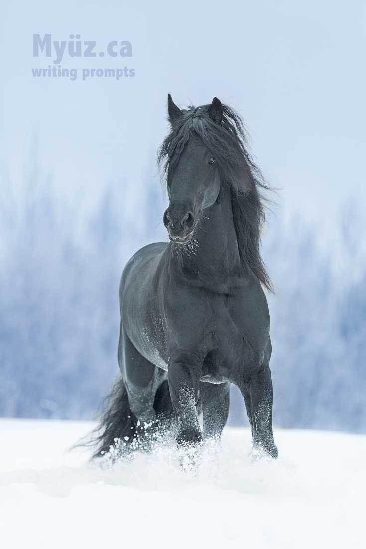 """Four stunning stallion photos in one creative writing project. See this black Friesian in """"The Stallion"""" writing course."""