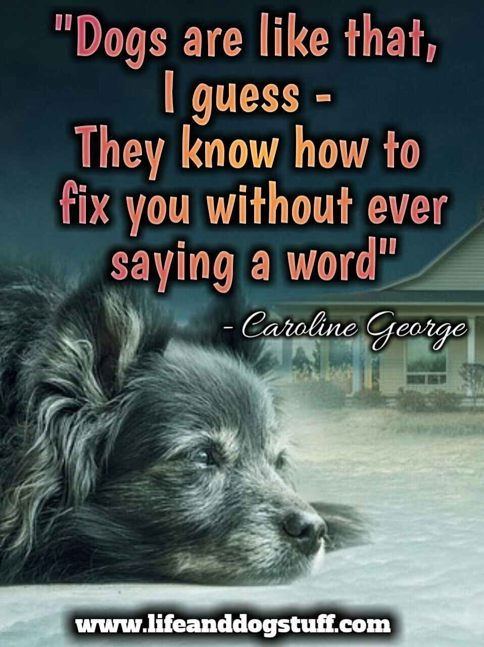 Dog Quotes Pet Quotes Inspirational Quotes Dog Quotes And Sayings Dogquotes Dog Quotes Love Dog Quotes Inspirational Dog Quotes