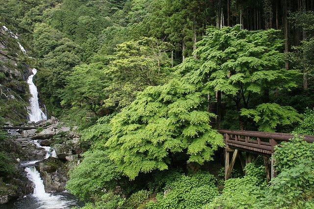 #Oichi #Japan #Kyushu