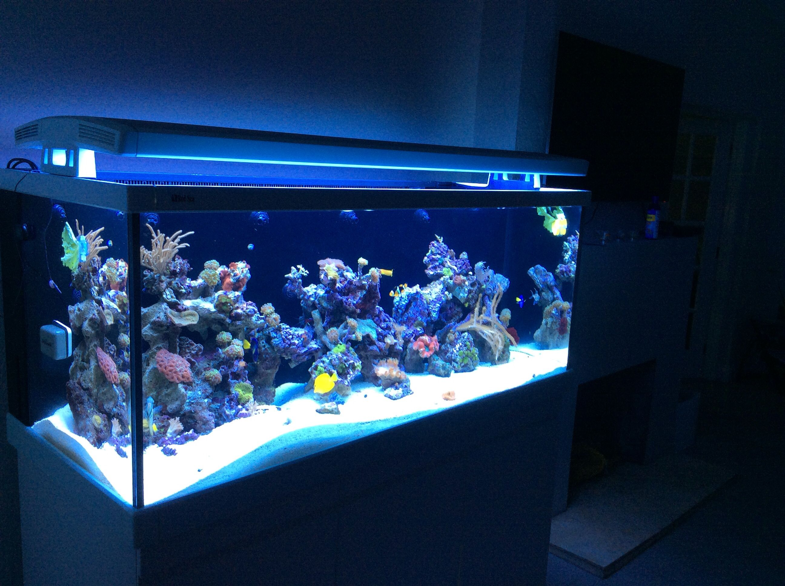 red sea max s 650 purchased from aquarium butler scaped. Black Bedroom Furniture Sets. Home Design Ideas