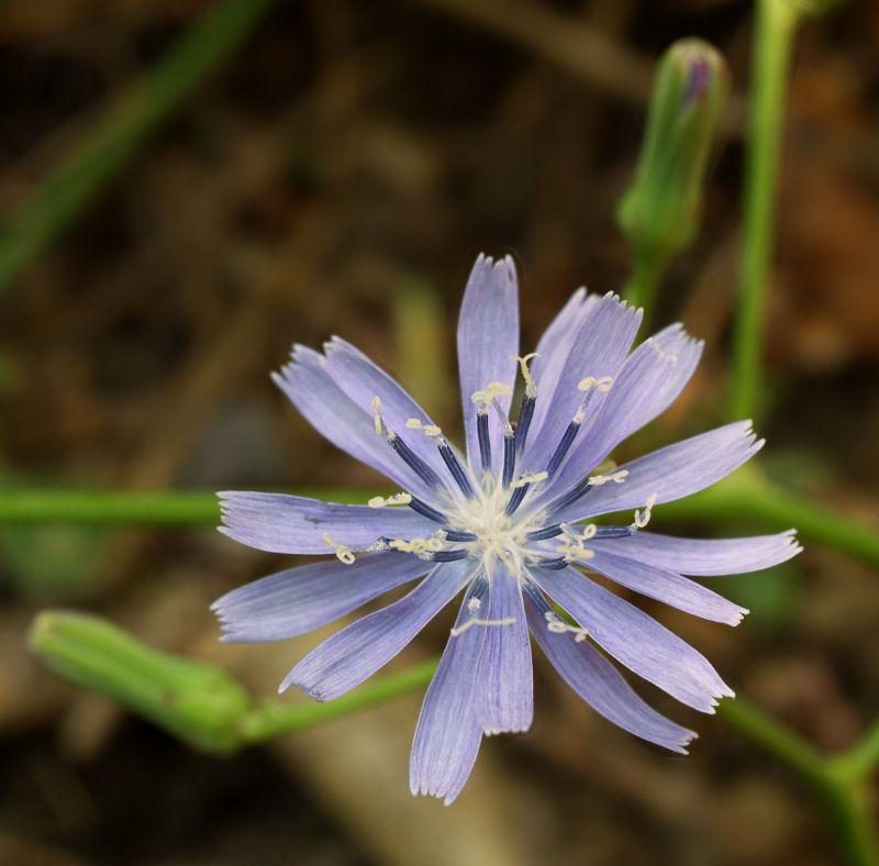 essa flor, disse-me um bom amigo é muito poderosa! Suas substâncias podem curar ou matar.