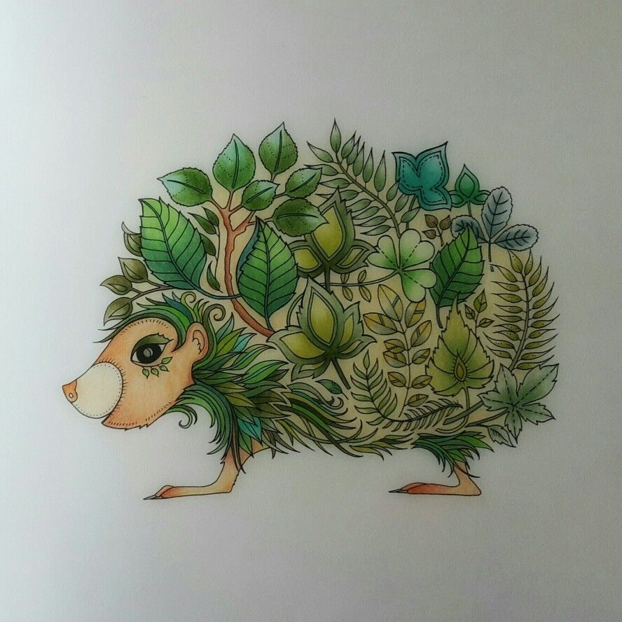 Pre Pimped Hedgehog From Johanna Basford Enchanted Forest Enchanted Forest Coloring Johanna Basford Enchanted Forest Johanna Basford Coloring Book