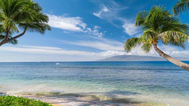 Hawaii Tropics Sea Coast Palms Fondos De Pantalla Hd Fondos De