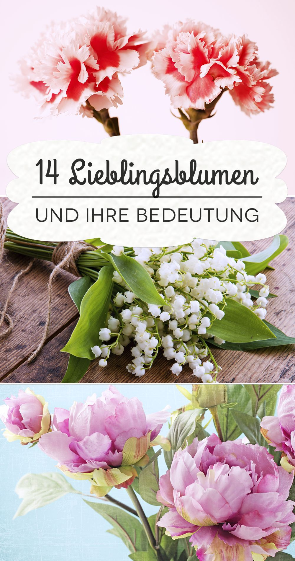 Sag S Durch Die Blume Die Bedeutung Von Nelken Rosen Co Blumen Fur Garten Nelken Blumen Nelke Hochzeit
