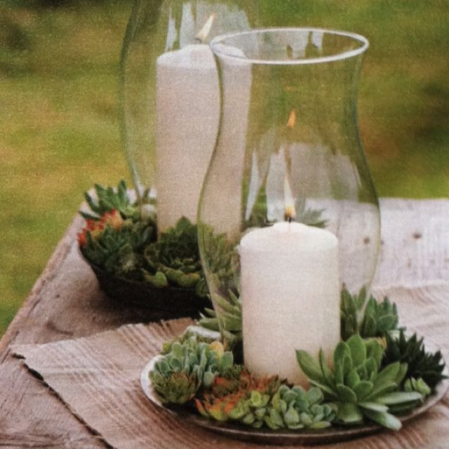 Hurricane succulent centerpiece,in the glass table with candle holders , keep the candle in and put the succulents around it