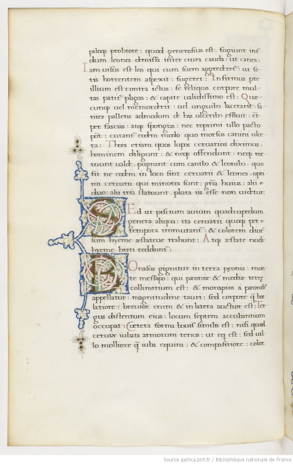 Aristoteles De Animalibus Theodorus Gaza Interpres Deux