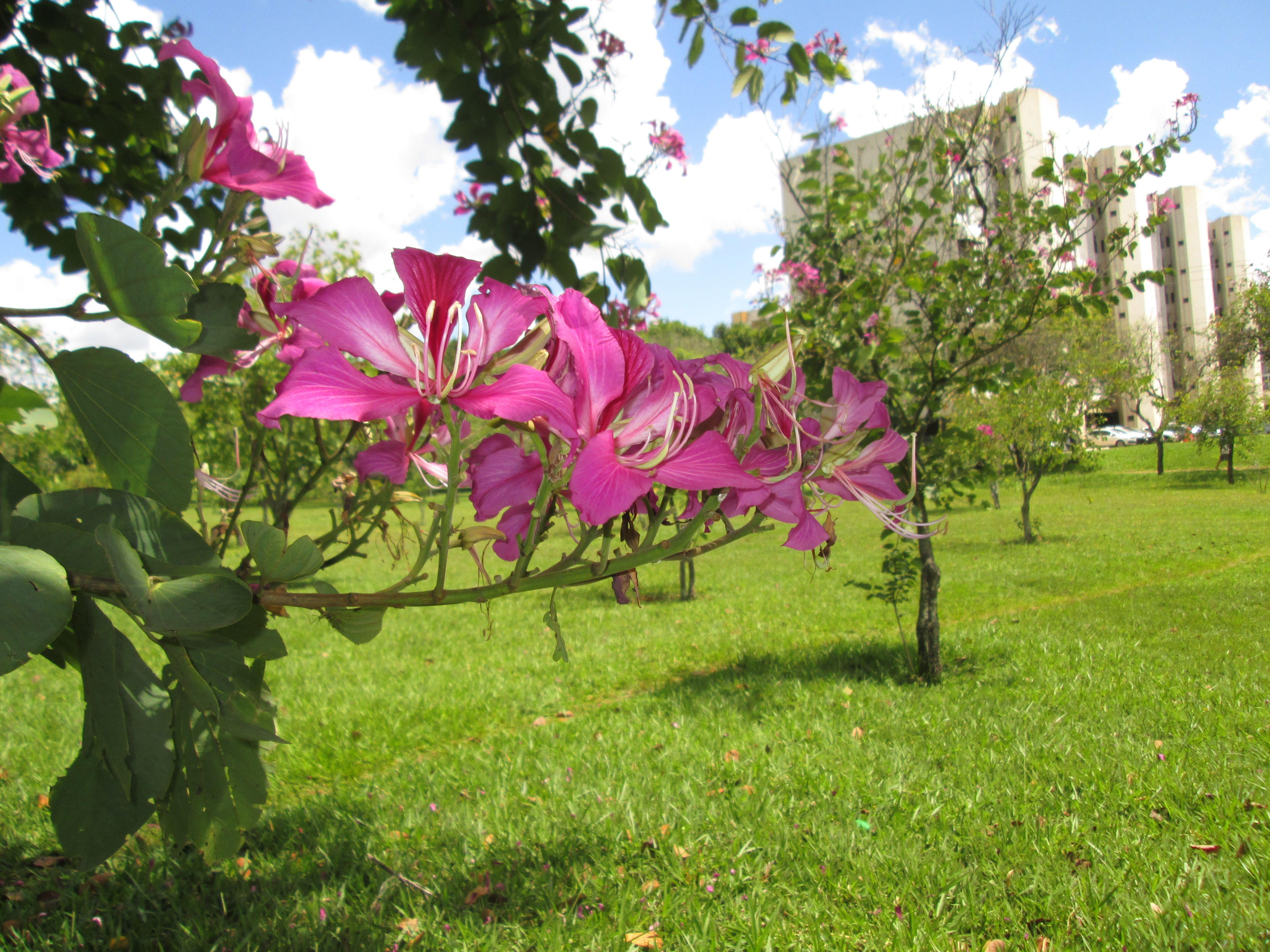 Flor Do Cerrado Brasilia Flores Do Cerrado Fotos De Flores