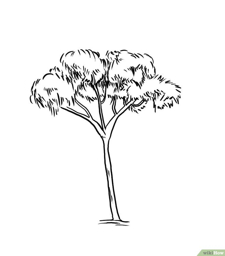 Draw A Gum Tree In 2020 Tree Drawing Animal Line Drawings Tree Sketches
