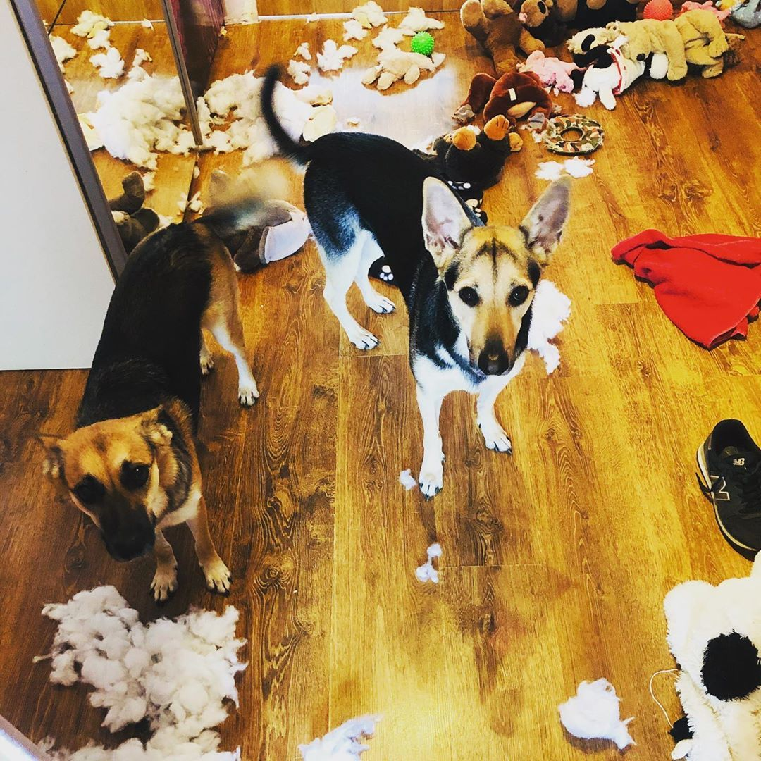 What a mess.#dog #dogs #dogsofinsta #dogsofinstgram #doglife