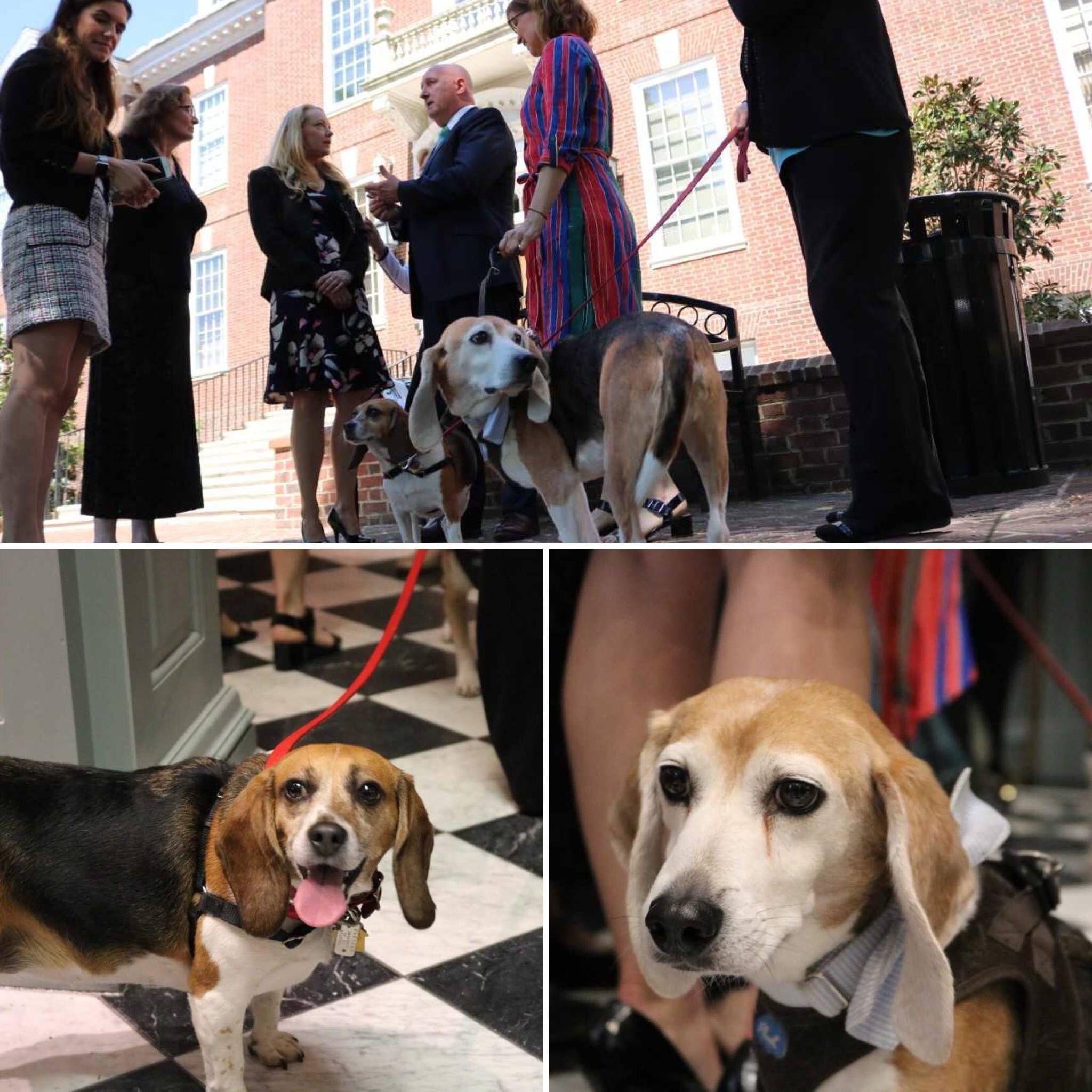 It S Worldweekforanimalsinlabs Our Beagle Freedom Bill Has