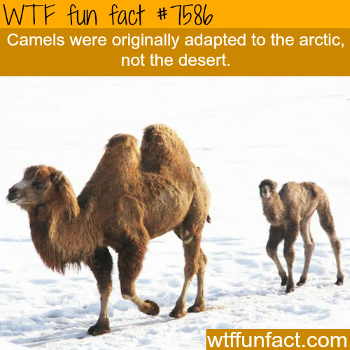 New Funny Facts  Amazing WTF Fun Facts About Animals That Will Blow Your Mind! 6